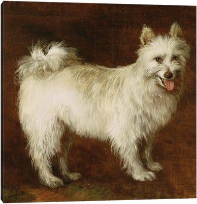 Spitz Dog, c.1760-70  Canvas Art Print