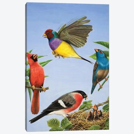 Tropical Birds  3-Piece Canvas #BMN3080} by R.B. Davis Canvas Art Print