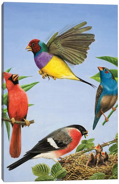 Tropical Birds  Canvas Art Print