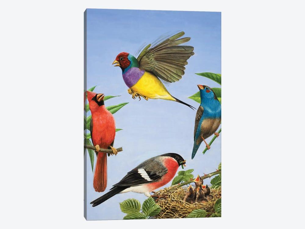 Tropical Birds  by R.B. Davis 1-piece Canvas Print