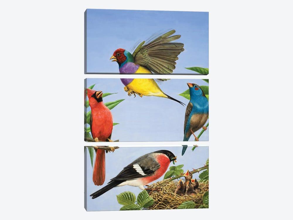 Tropical Birds  by R.B. Davis 3-piece Art Print