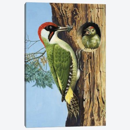Woodpecker  Canvas Print #BMN3081} by R.B. Davis Canvas Print