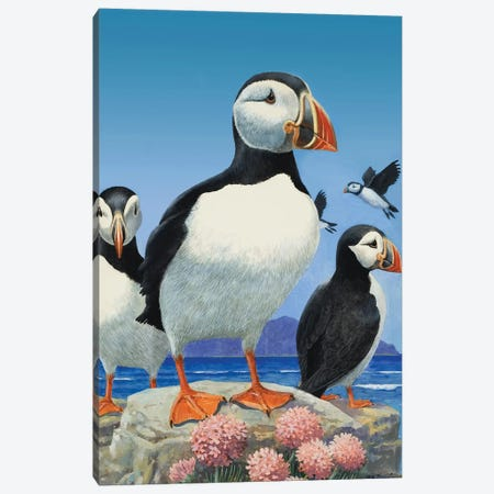 Puffins  Canvas Print #BMN3086} by R.B. Davis Canvas Art