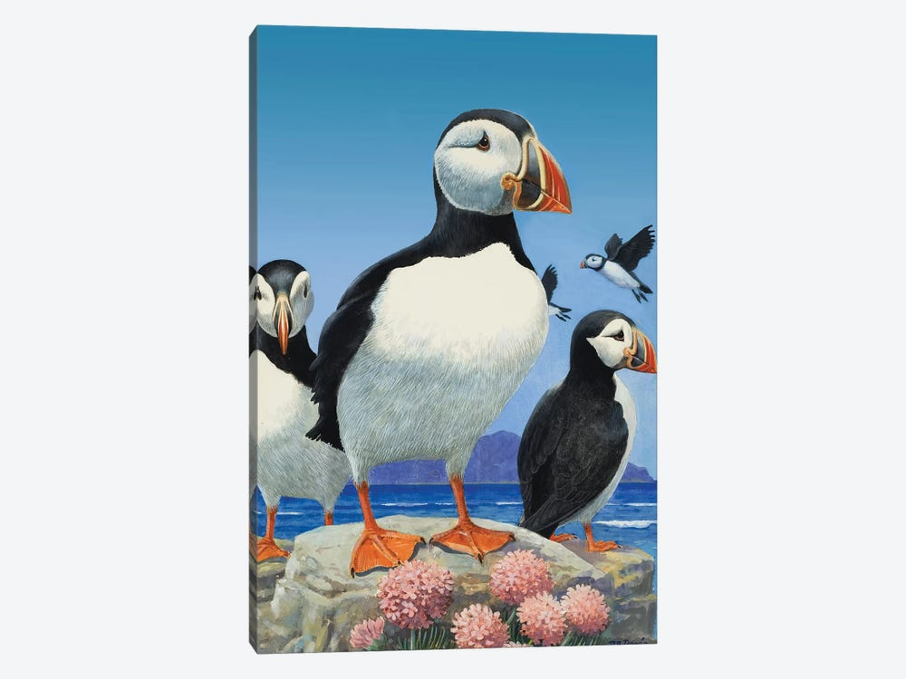 Puffins  by R.B. Davis 1-piece Art Print