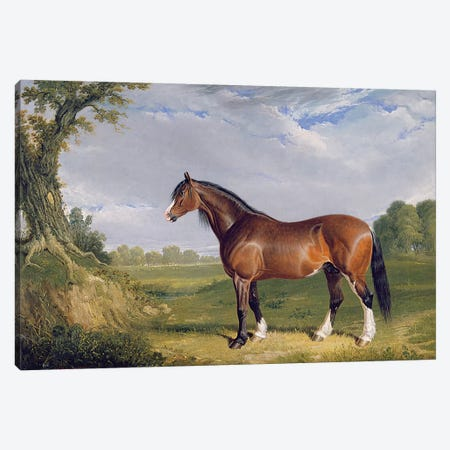 A Clydesdale Stallion, 1820  Canvas Print #BMN3096} by John Frederick Herring Sr Canvas Print