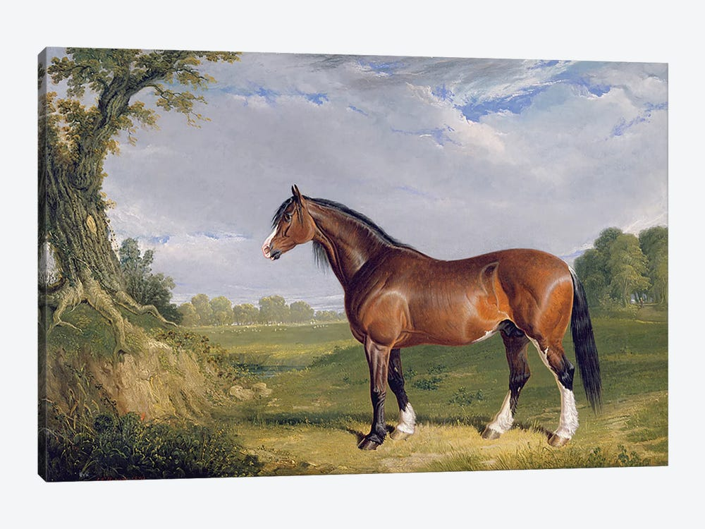 A Clydesdale Stallion, 1820  by John Frederick Herring Sr 1-piece Canvas Art