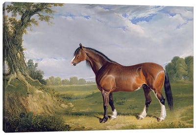 A Clydesdale Stallion, 1820  Canvas Art Print