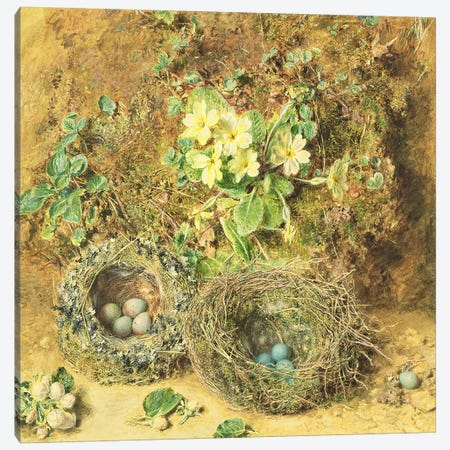 Primroses and Birds' Nests  Canvas Print #BMN317} by William Henry Hunt Art Print