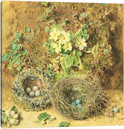 Primroses and Birds' Nests  Canvas Art Print