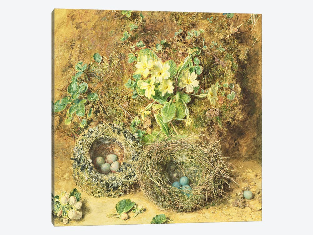 Primroses and Birds' Nests  by William Henry Hunt 1-piece Canvas Print