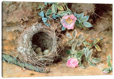Wild Roses and Birds' Nests Canvas Art Print