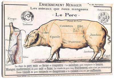 Cuts Of Pork Illustration From A French Domestic Science Manual Canvas Art Print