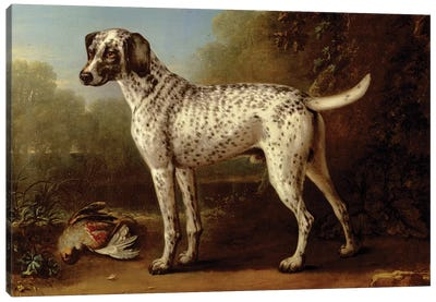 Grey spotted hound, 1738  Canvas Art Print