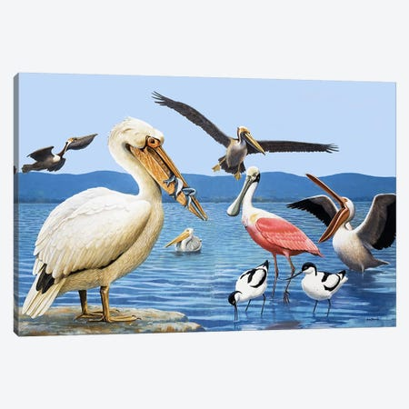 Birds with strange beaks Canvas Print #BMN3287} by R.B. Davis Canvas Artwork
