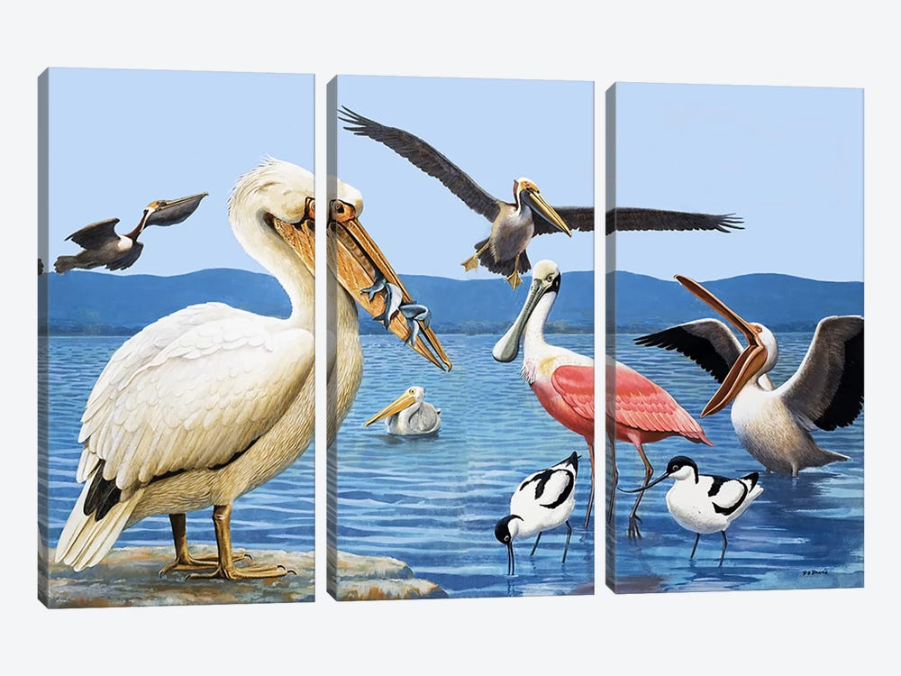 Birds with strange beaks by R.B. Davis 3-piece Canvas Print