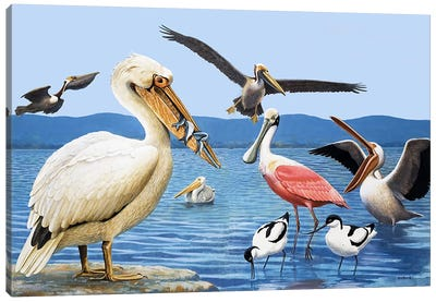Birds with strange beaks Canvas Art Print