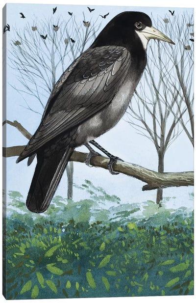 Rook Canvas Art Print