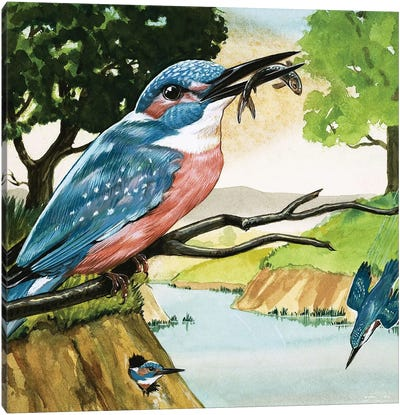 The Kingfisher Canvas Art Print
