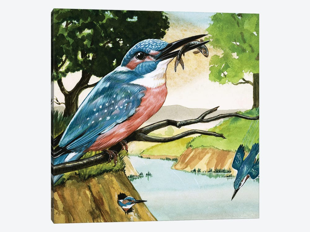 The Kingfisher by D. A. Forrest 1-piece Canvas Art Print