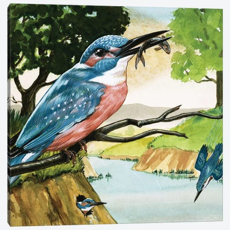 The Kingfisher Canvas Print #BMN3289} by D. A. Forrest Canvas Print