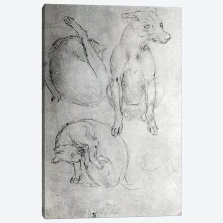 Study of a dog and a cat, c.1480  Canvas Print #BMN3372} by Leonardo da Vinci Canvas Art Print