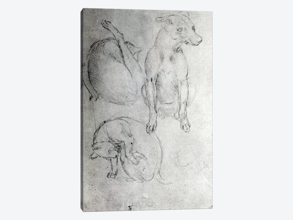 Study of a dog and a cat, c.1480  by Leonardo da Vinci 1-piece Canvas Wall Art