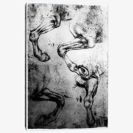 Studies of Horses legs  Canvas Print #BMN3376} by Leonardo da Vinci Canvas Art