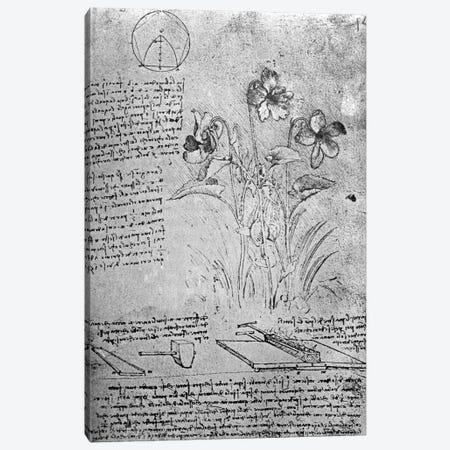 Studies of Violas  Canvas Print #BMN3385} by Leonardo da Vinci Canvas Art Print