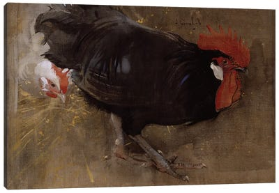 The Black Cock  Canvas Art Print