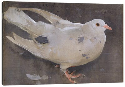 The Pigeon  Canvas Art Print