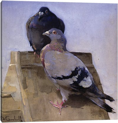 Pigeons on the Roof  Canvas Art Print