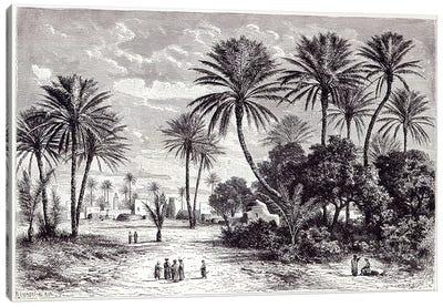 Oasis of Gafsa: Tunis  Canvas Art Print