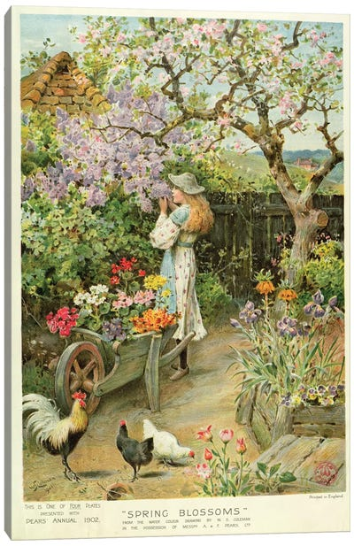 Spring Blossoms, from the Pears Annual, 1902 Canvas Art Print