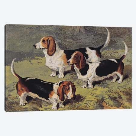Basset Hounds, 1890  Canvas Print #BMN3445} by English School Canvas Art