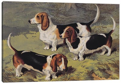 Basset Hounds, 1890  Canvas Art Print