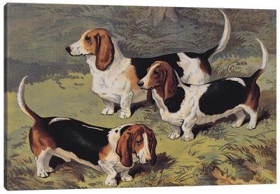Basset Hounds, 1890  Canvas Art Print