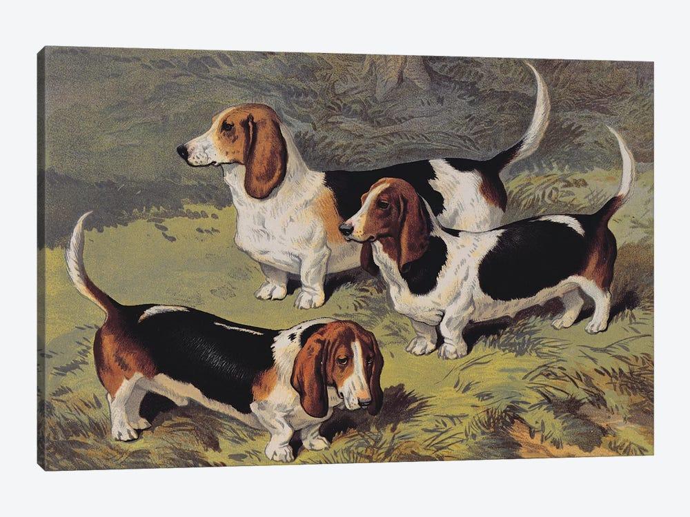 Basset Hounds, 1890  by English School 1-piece Canvas Art Print