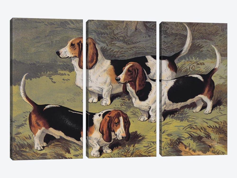 Basset Hounds, 1890  by English School 3-piece Art Print