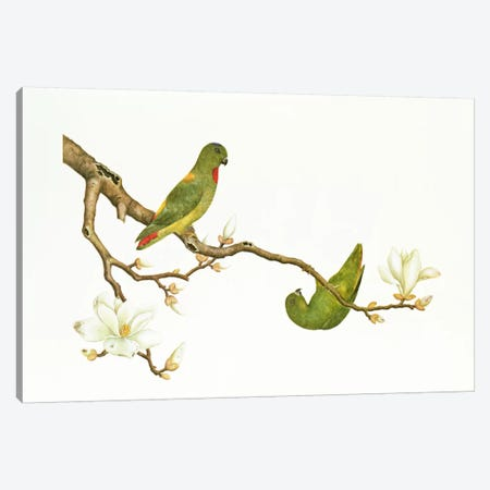 Blue-crowned parakeet, hanging on a magnolia branch, Ch'ien-lung period  Canvas Print #BMN348} by Qing Dynasty Chinese School Art Print