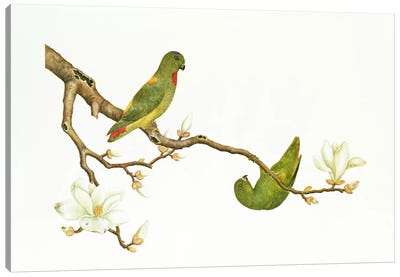 Blue-crowned parakeet, hanging on a magnolia branch, Ch'ien-lung period  Canvas Art Print