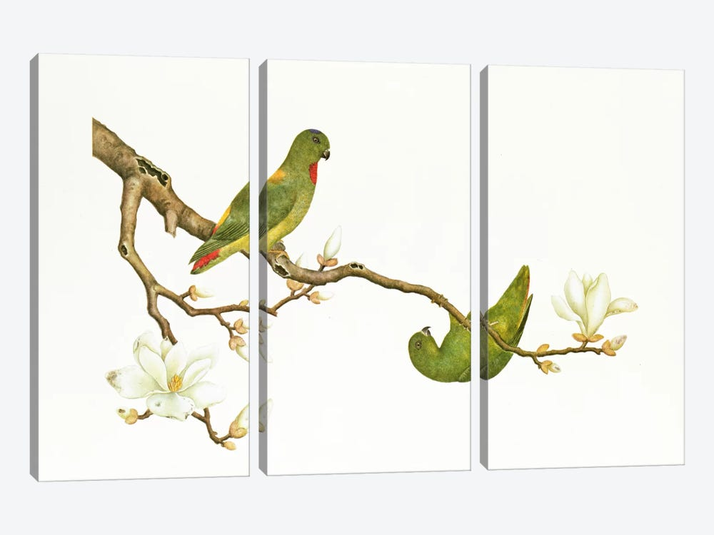 Blue-crowned parakeet, hanging on a magnolia branch, Ch'ien-lung period  by Qing Dynasty Chinese School 3-piece Canvas Print