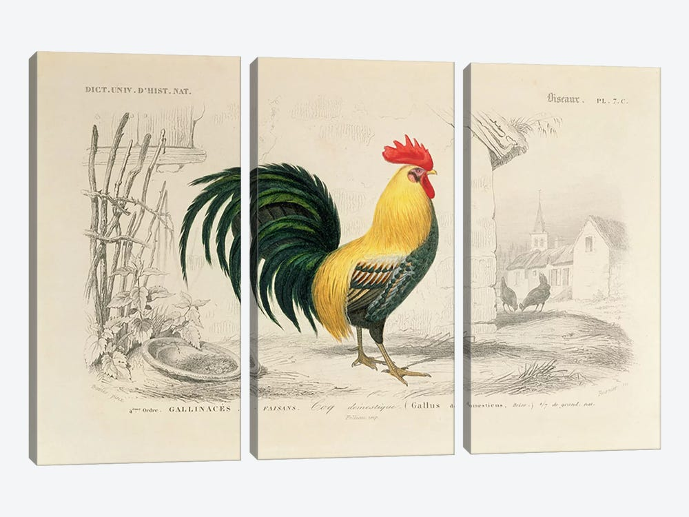 Domestic Cock, Illllustration From Dictionnaire Universel d'Histoire Naturelle by Edouard Travies 3-piece Canvas Art