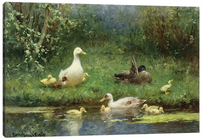 Ducks on a riverbank  Canvas Art Print