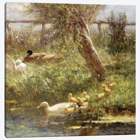 Ducks and ducklings  Canvas Print #BMN3572} by David Adolph Constant Artz Canvas Art Print