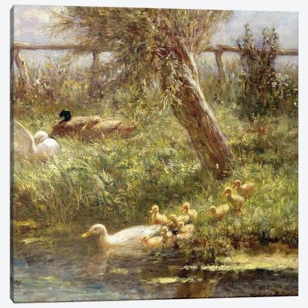 Ducks and ducklings  Canvas Print #BMN3572} by David Adolph Constant Artz Canvas Art Print