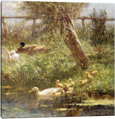 Ducks and ducklings  Canvas Art Print