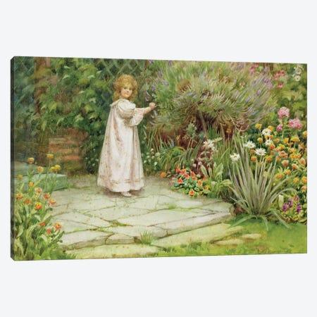 My Garden  Canvas Print #BMN3573} by William Ashburner Canvas Print