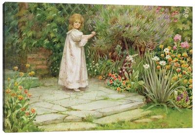 My Garden  Canvas Art Print