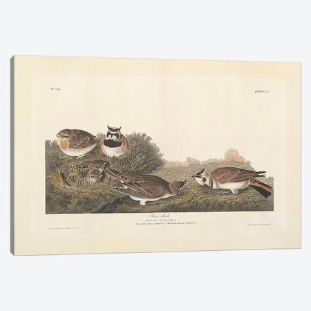 Shore Lark Canvas Print #BMN3647} by John James Audubon Canvas Artwork