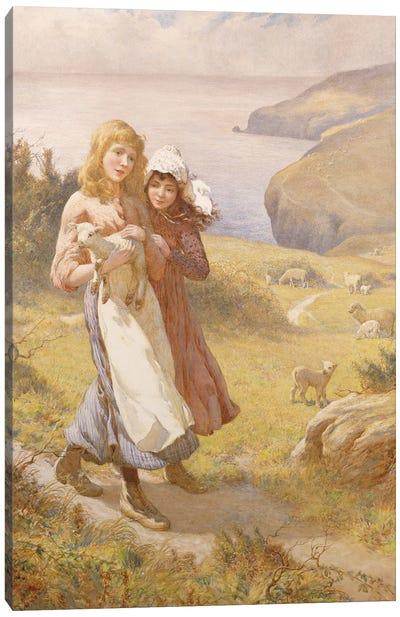 The Lost Lamb  Canvas Art Print
